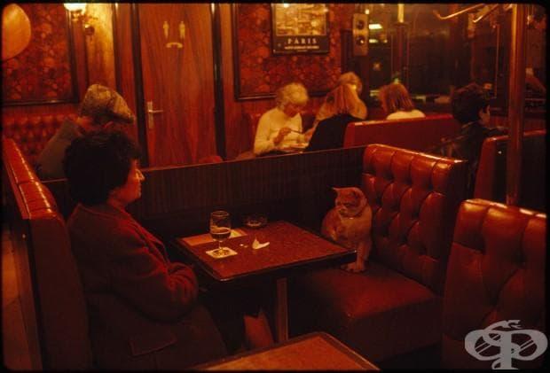 """Le Louis Ix в Париж, котката """"Карамел"""" прави компания на клиент, май 1988"""