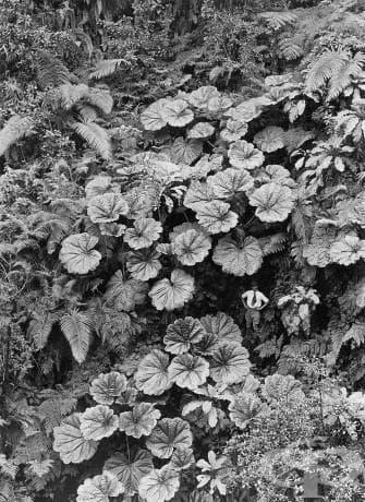 Хавай, 1924