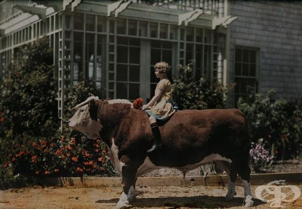 Дете, възседнало бик , Калифорния, 1926