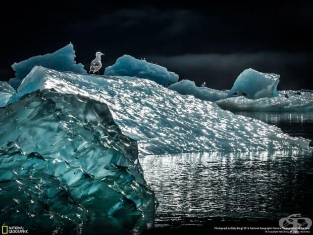 Финалистите от конкурса на National Geographic за природен фотограф на годината
