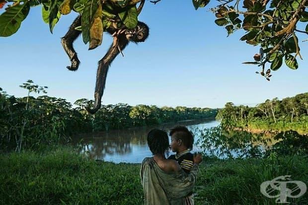 Коренното население на Перу отглежда стопанство и ловува в горите Ману, но само за собственото си оцеляване. Маймуната паяк е любима плячка - а също и любим домашен любимец.