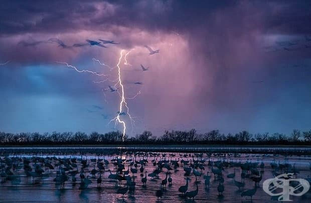 Вечерна буря осветява небето близо до Ривър Ууд, Небраска. Около 413 000 канадски жерави пристигат да нощуват в плитчините на река Плат.