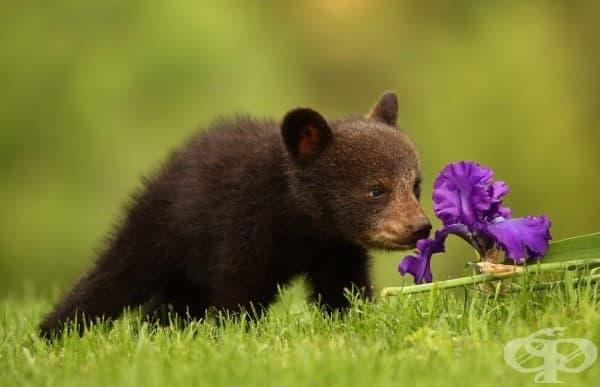 20 сладки животни, които мечтаят вече за пролетта