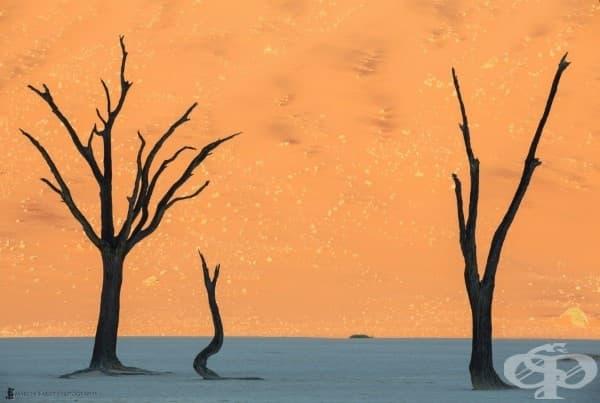 Пустиня в Намибия