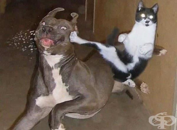 23 нинджа котки, овладели древното изкуство нинджицу