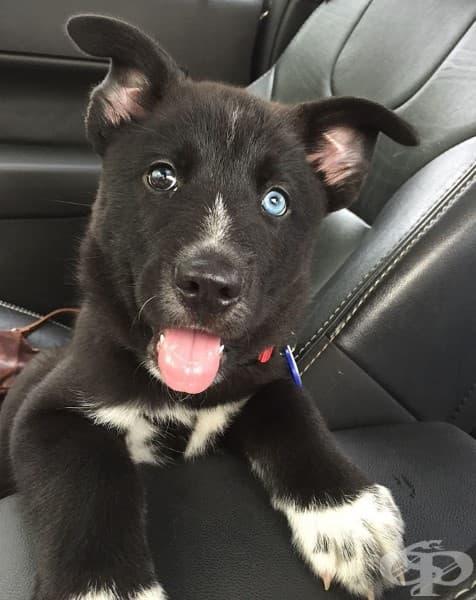 15 кучета, снимани в деня на осиновяването им