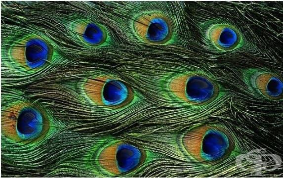 23 случайни неща, които мозъкът ви ще разпознае като очи!