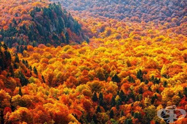 Поразителните цветове на гората през есента.