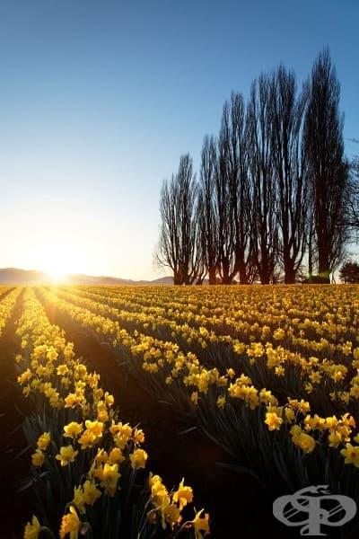 15 пъстри поля с прекрасни пролетни цветя