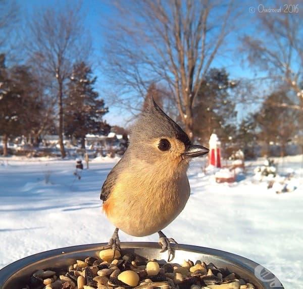 Вижте невероятни близки кадри на любопитни птички