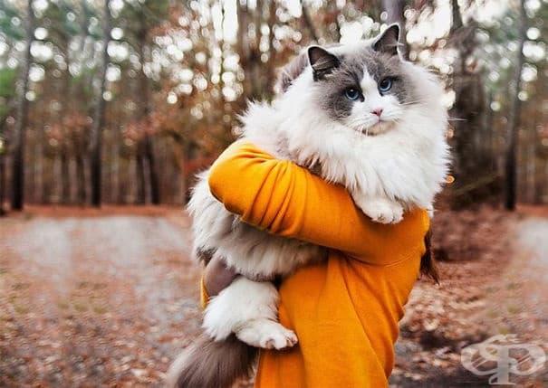 20 от най-пухкавите котки в света