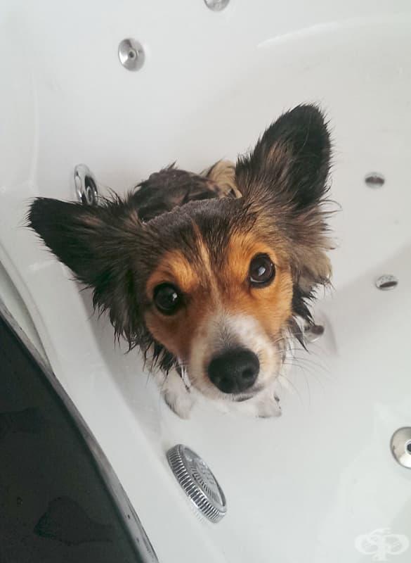Защо кучетата трябва да се къпят?