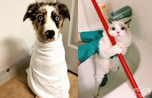 Забавни физиономии на животни след първата им баня