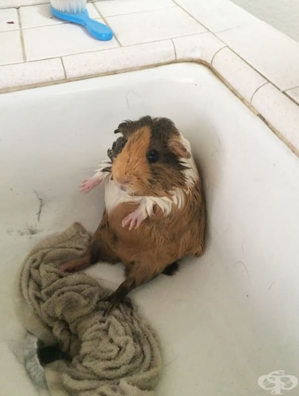 Не е сигурен какво да мисли за банята…