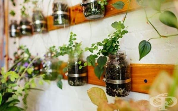 Момиче отглежда повече от 500 растения в апартамента си