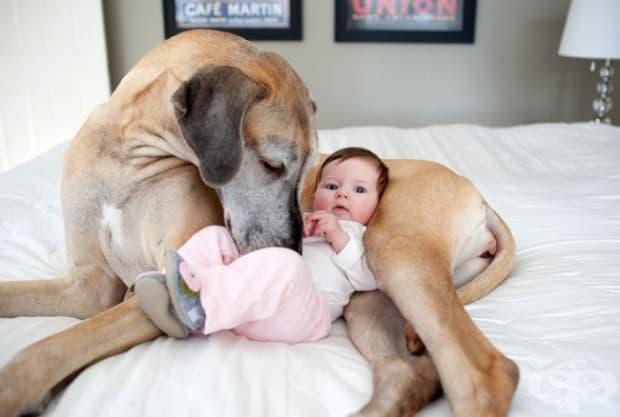 Големите кучета също са големи помагачи, когато мама и тате се нуждаят от помощ.