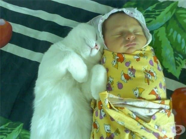 Родителите, които имат домашен любимец знаят, че той ще се грижи за бебето, както би направила мама. Котките например, са много добри в успокояването.