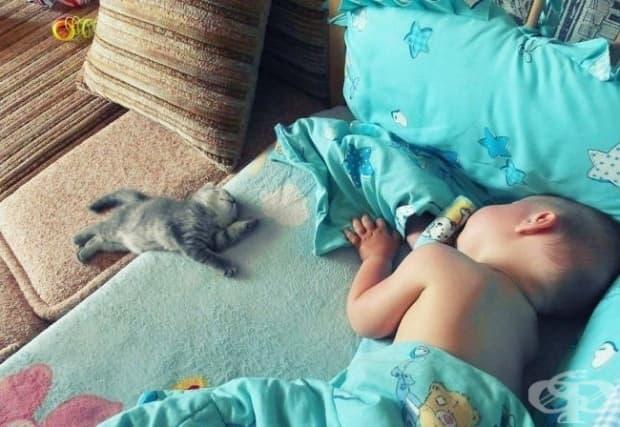 Дори малките котенца знаят как да помогнат!