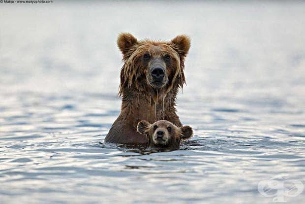 22 фотографии, които доказват, че родителската любов е универсална!