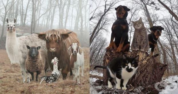 10 снимки на животни, които приличат на рок, рап и метъл банди