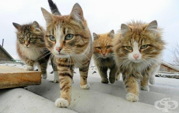 Представяме ви най-новата гръндж банда на сцената.