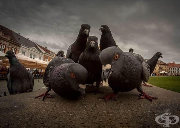 Тези гълъби сякаш позират за корицата на рап албум от 90-те.