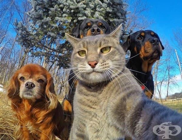 Селфи с бандата