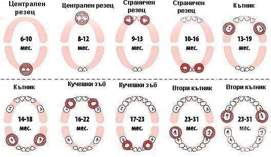 Схема за поникване на зъбите при децата - изображение