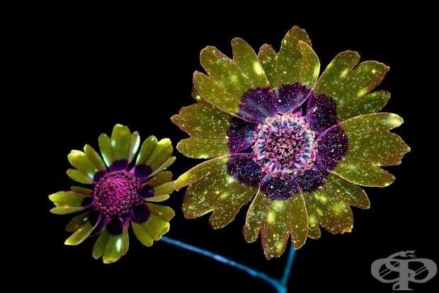 Зашеметяващи снимки на светещи цветя