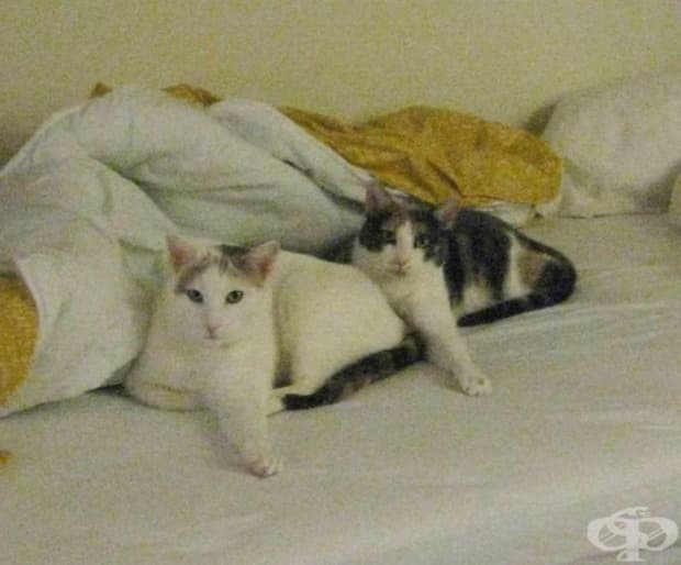 Представяме ви печелившите котки в дисциплината синхронно спане