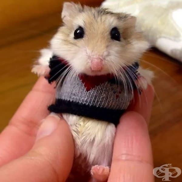 15 животни, облечени в пуловери