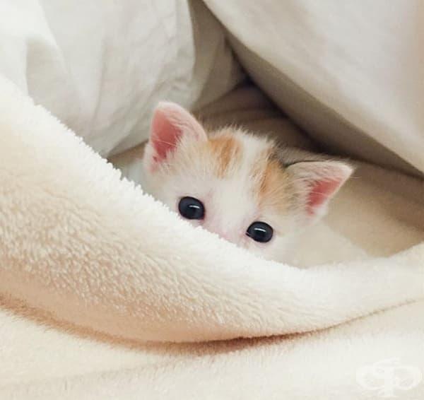 Вижте най-сладките котенца на света