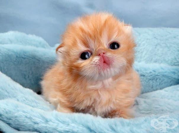Вижте най-сладките котенца на света - изображение