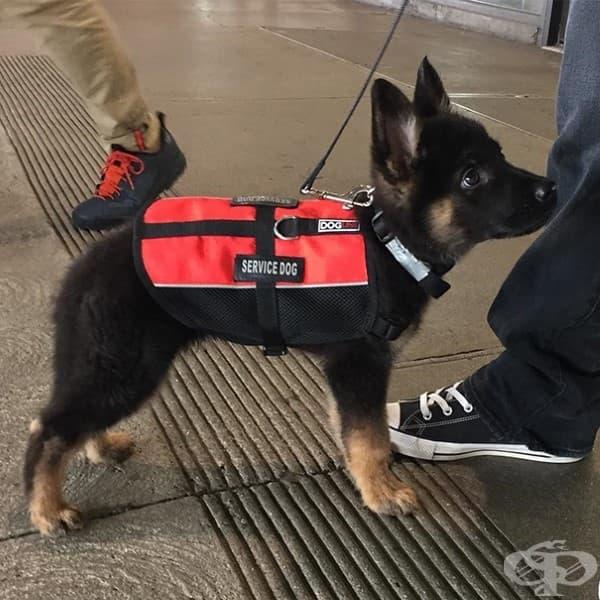 Иии най-сладкото служебно кученце!