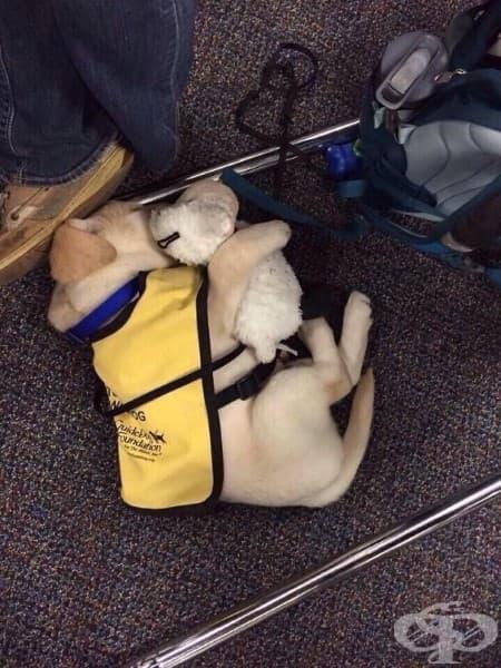 Кученце водач с плюшената си играчка