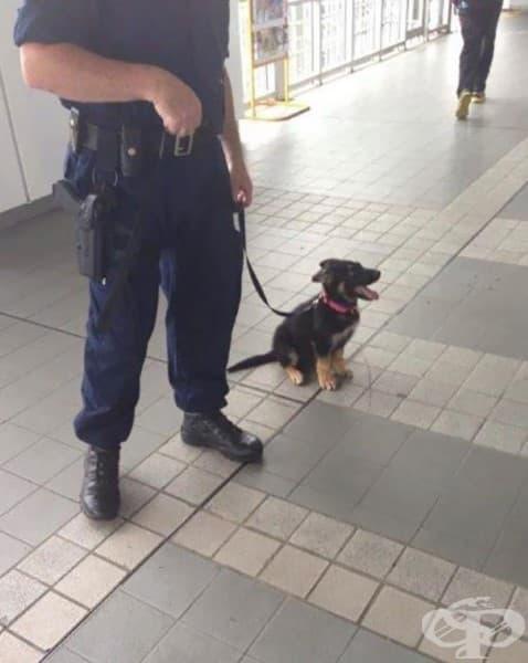 Един ден ще бъда голямо полицейско куче