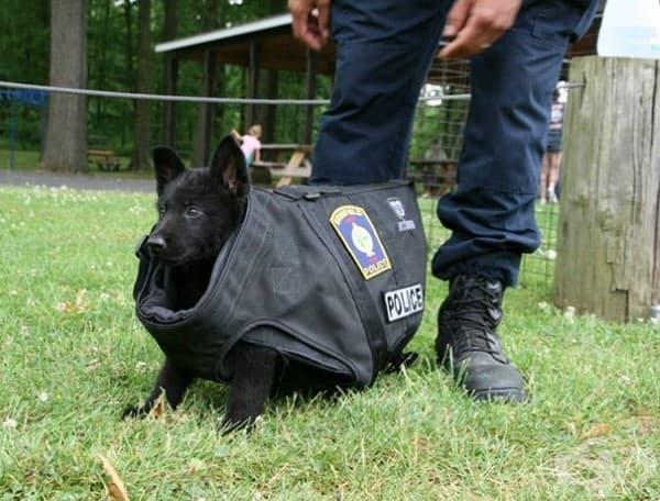 Първия тренировъчен ден на ново кученце. Е, бронираната жилетка му е още голяма… но и то ще порасне!