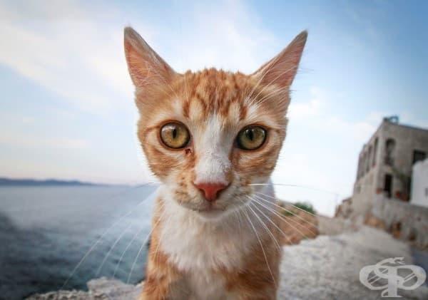 Остров Хидра , Гърция