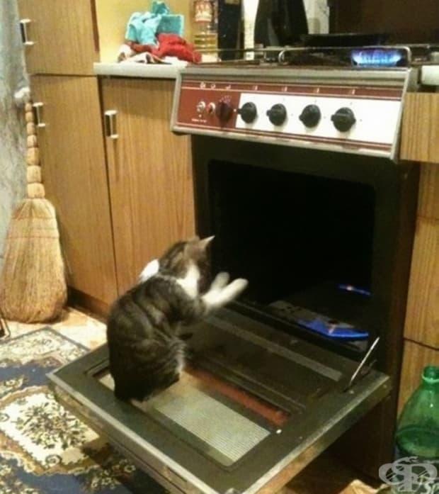 Призовава Сатаната. Или просто си топли лапичките. Не, той е котка, определено призовава Сатаната.