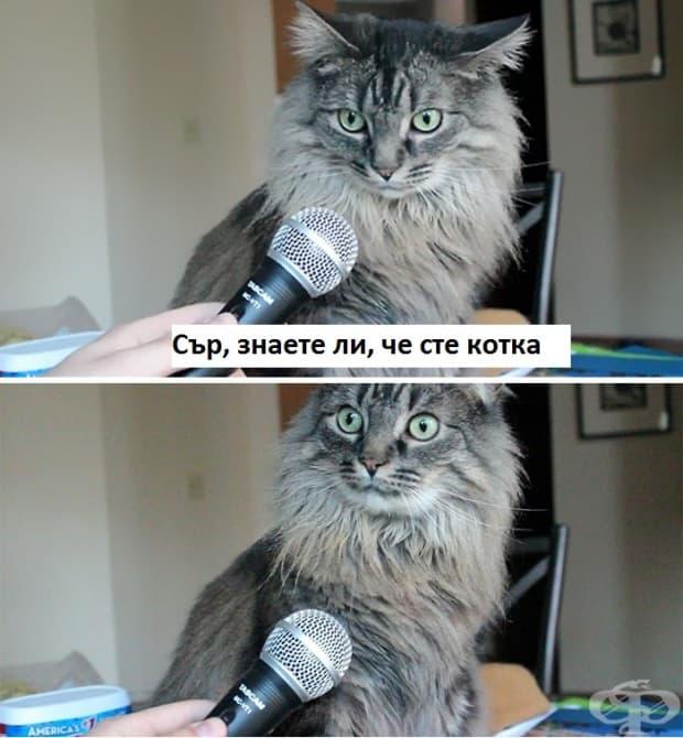 Сър, осъзнавате ли, че сте котка?