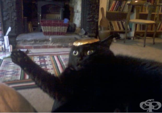 """""""Поставих фолио на главата на моята котка и тя просто седна и ме гледа ужасена, докато не го махнах. Изводът: котките се контролират от правителствени сателити. Когато блокирате сигнала, те изключват."""""""