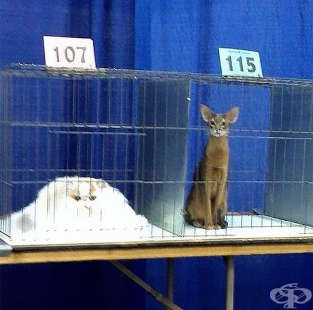 Котките биват два вида – в течно и в твърдо състояние.