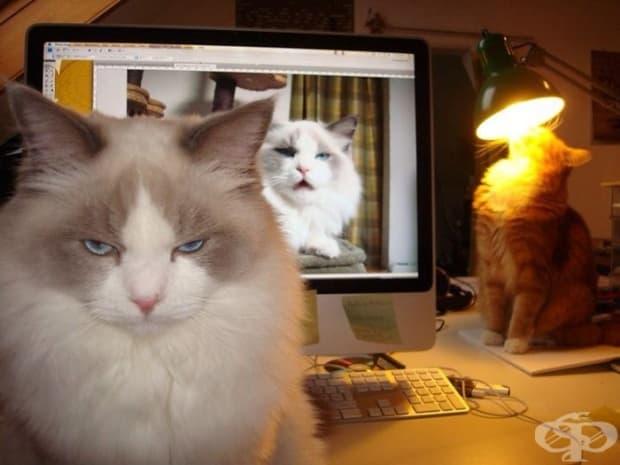 Какво представляват котките? Всички отговори в една снимка.