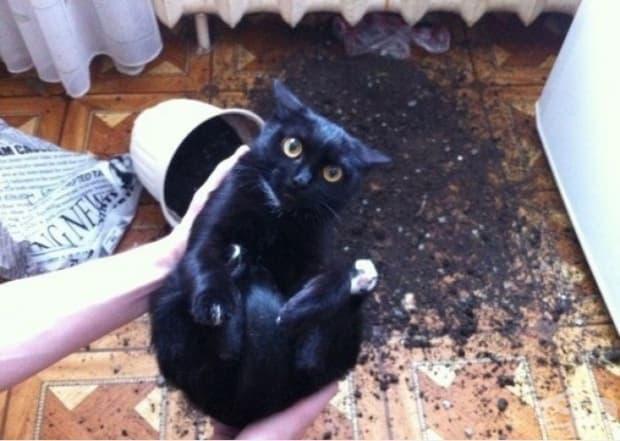 Току що извадих котка от саксията с пръст. Тази година реколтата е добра.