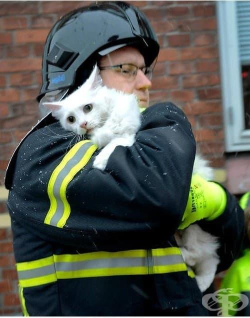 """Когато напишете в Google думите """"пожарникар и котка"""" очаквате да видите снимка като тази"""