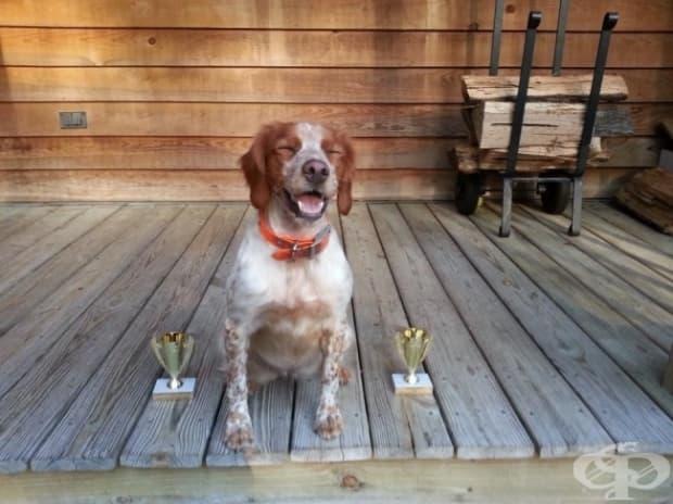 Кучето ми спечели първо място в състезанието за ловни кучета. Само погледнете гордата му муцуна!