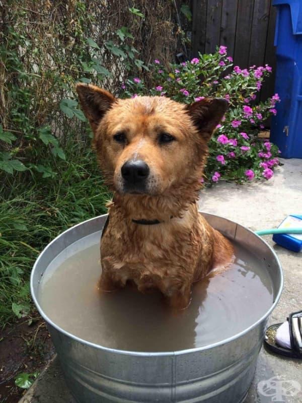 Кучето ми мрази да се мокри, но знае, че ако стои мирно, къпането свършва по-бързо.