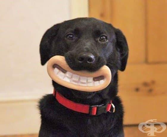 Тези кучета със своите смешни играчки ще ви накарат да се усмихнете, обещаваме!