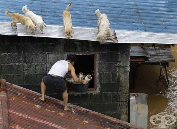 Мъж спасява кученца по време на потопа във Филипини.
