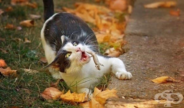 Не съм храна за котки!